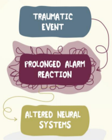Diagram of coloured bubbles stating trauma event - prolonged alarm reactopm - altered neural systems