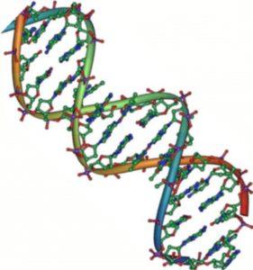 Native DNA