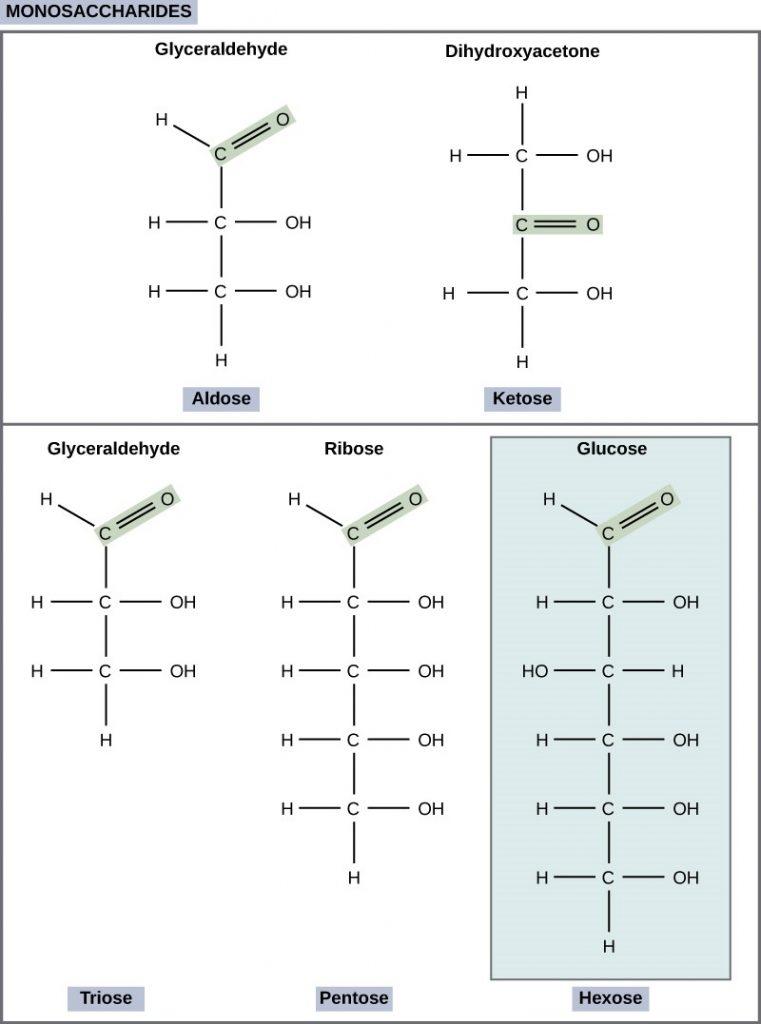 Classifications of monosaccharides