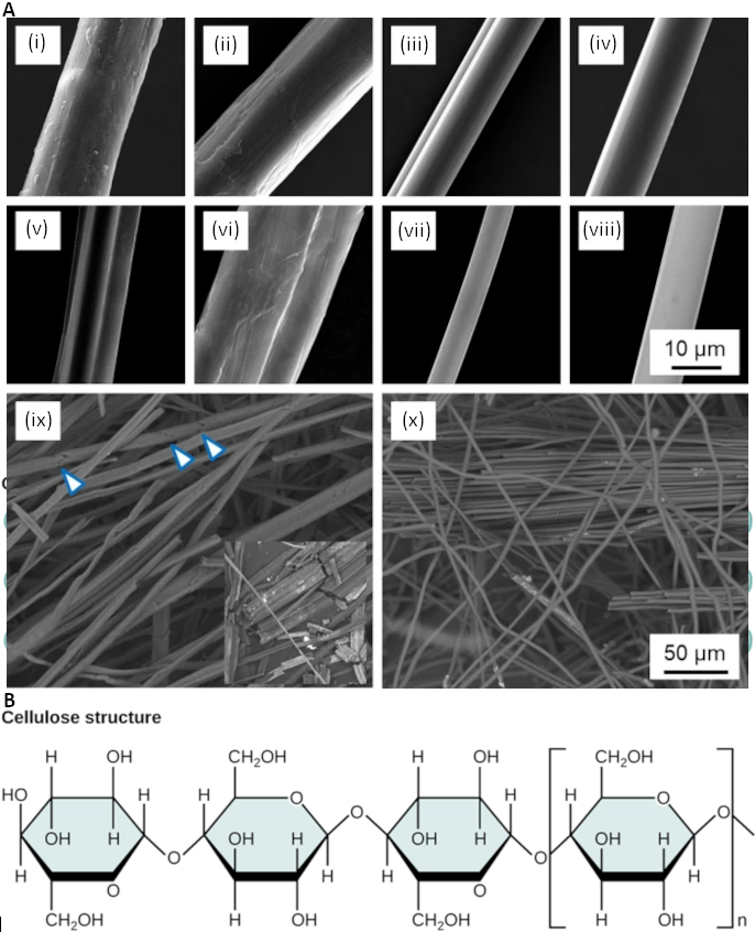 Figure 2.2.7. Figure 2.2.7. A) Scanning electron microscopy of single cellulose fibres (i) hemp, (ii) ramie, (iii) viscose, (iv) Tencel and their carbonised counterparts (v-viii) together with a low-magnification image of carbonised natural hemp fibres (ix) and Tencel regenerated cellulose fibres (x). Arrowheads in (ix) indicate cracks across the diameter of carbonised fibres leading to easy fragmentation as shown in the inset (note that a pair of fibres is shown in vi) (https://link.springer.com/article/10.1007/s10853-020-04743-y); B) Cellulose structure in cellulose, glucose monomers are linked in unbranched chains by β 1-4 glycosidic linkages. Because of the way the glucose subunits are joined, every glucose monomer is flipped relative to the next one resulting in a linear, fibrous structure.