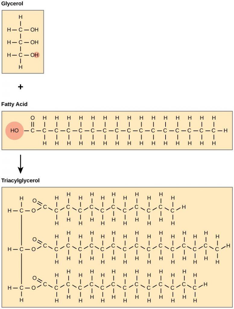 Fatty acid dehydration reaction
