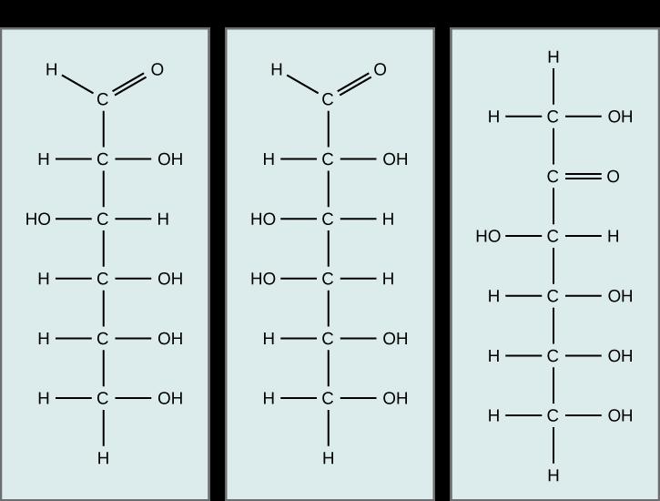 Glucose isomers. Glucose, galactose, and fructose