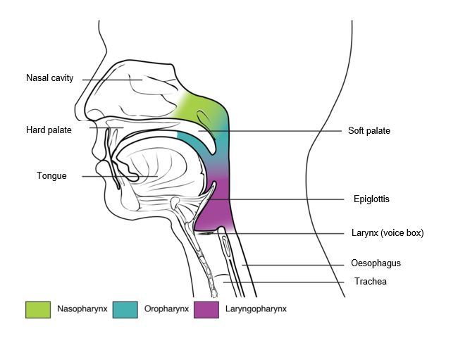 Diagram of facial parts