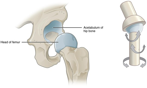 Multiaxial joint.