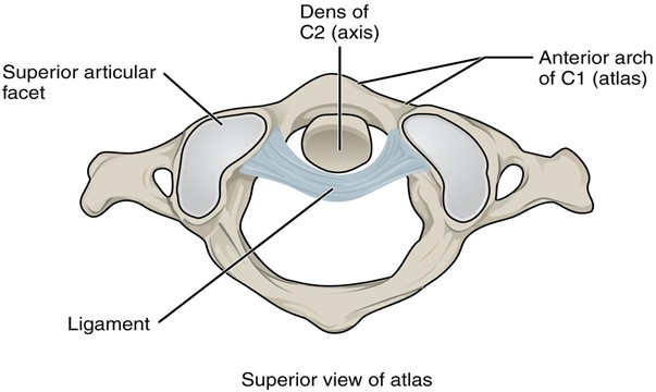 Diagram of Atlantoaxial joint