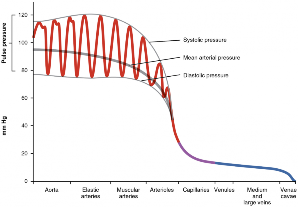 The graph shows the components of blood pressure throughout the blood vessels, including systolic, diastolic, mean arterial, and pulse pressures.