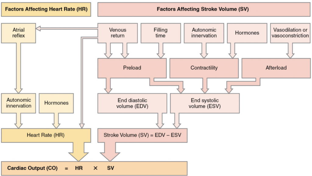 Flowchart that simarise major factors influencing cardiac output