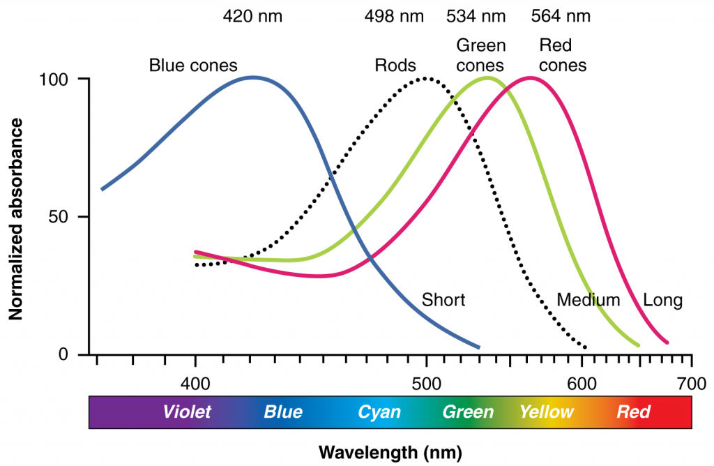 Comparison of colour sensitivity of photopigments in graph