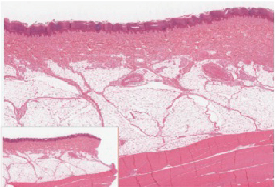 Cell image if epidermis
