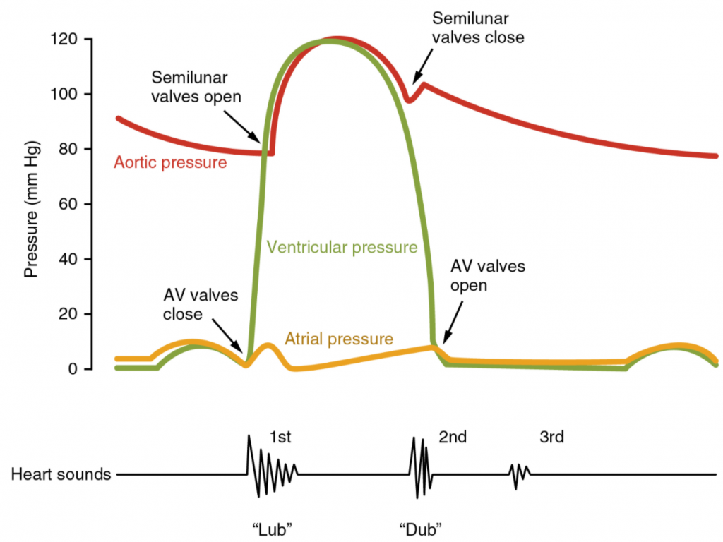 Graph of heart sounds