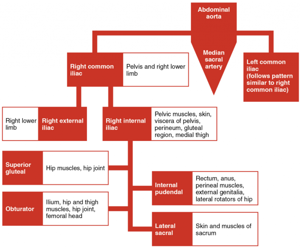 The flow chart summarises the distribution of the major branches of the common iliac arteries into the pelvis and lower limbs. The left side follows a similar pattern to the right.