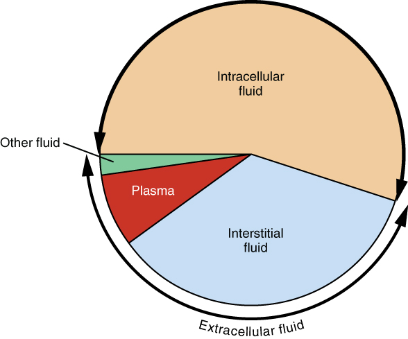 A pie graph showing the proportion of total body fluid in each of the body's fluid compartments.