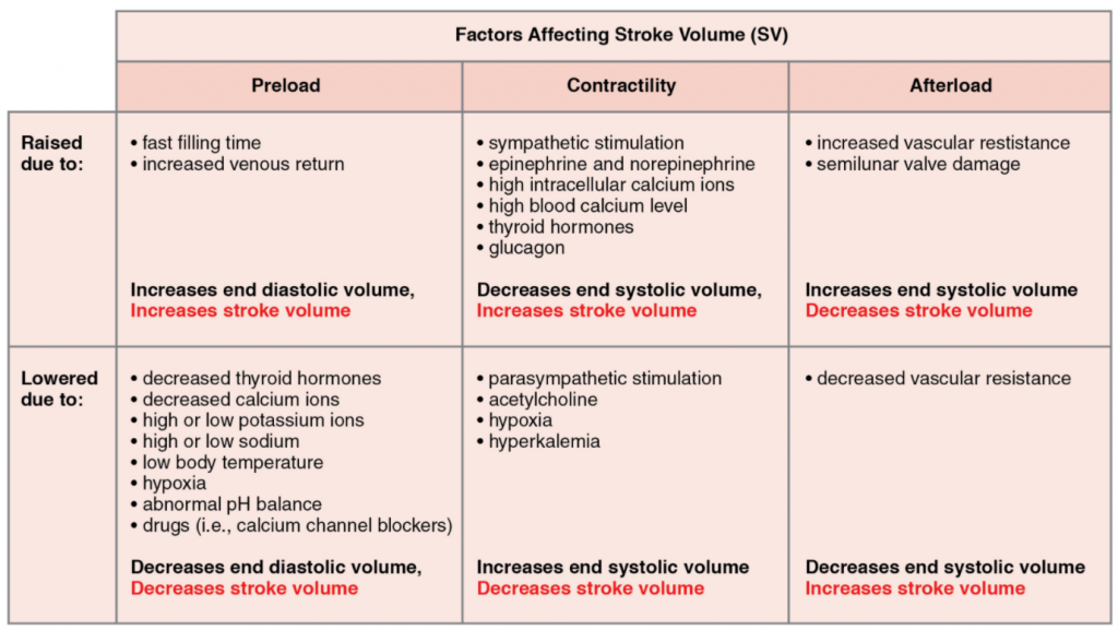 Major factors influencing stroke volume. Multiple factors impact preload, afterload, and contractility, and are the major considerations influencing SV.