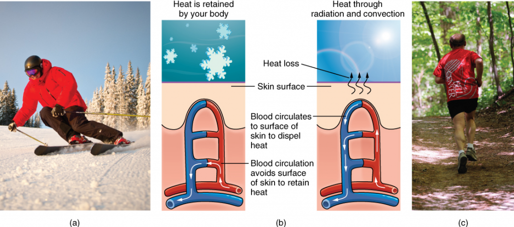 Three images: one of man skiing, one of man running and a diagram that shows how heat is retained and radiated through body