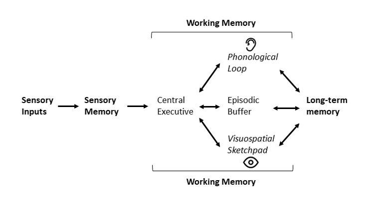 Diagram that links sensory inputs, sensory memory and working memory